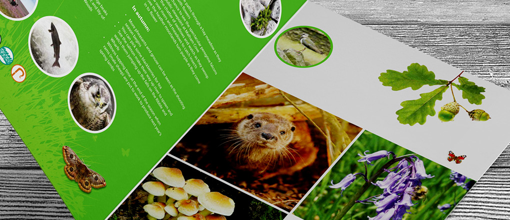 Double page spread from the Distinctly dales brochure